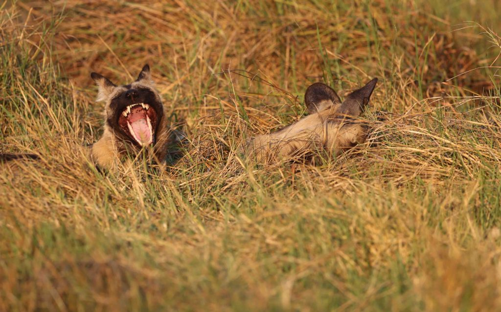 Waking up in the grass.... big yawn