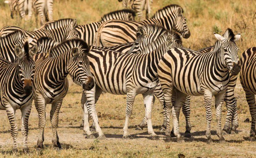 Places to Return to – Botswana